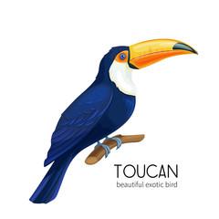 Vector toucan bird