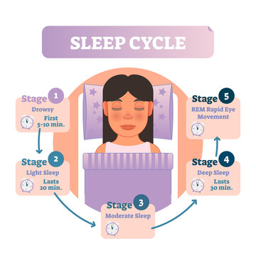 Healthy human sleep cycle vector illustration diagram with female in bed and sleep stages. Educational infographic scheme.