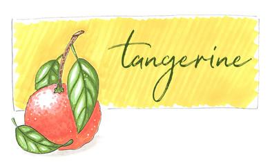 tangerine hand-drawn illustration on yellow background