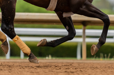 Close Up of Horse Legs All Off The Ground