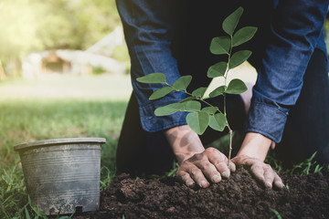 The young man is planting tree to preserve environment
