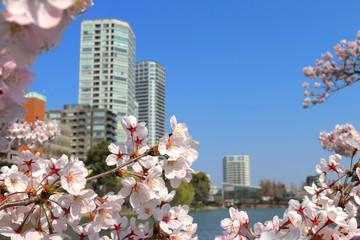 上野公園の桜(東京都・台東区)