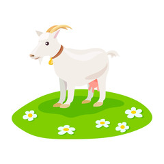 goat on green meadow isolated