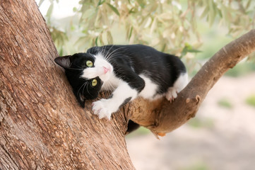Playful kitten rubbing its head on a branch of an olive tree, Cyprus