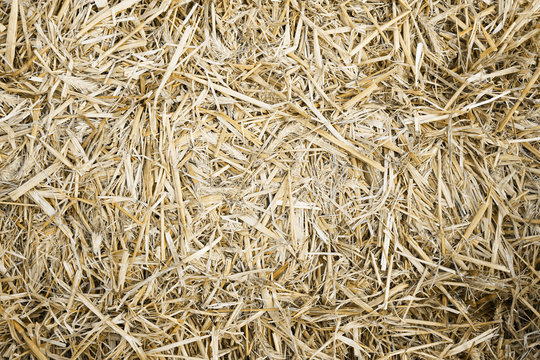 hay or straw bale close-up background texture