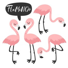 Pink flamingo set. Vector illustration.