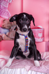 sad puppy with a cross on a pink background