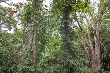 Dschungel Wald