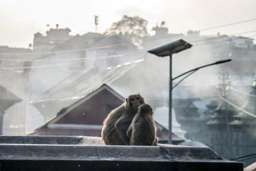 Affen bei Sonnenuntergang in Patschupatinath