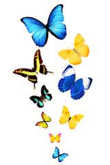 Бабочки разных размеров и форм, разных цветов изолированы на белом фоне