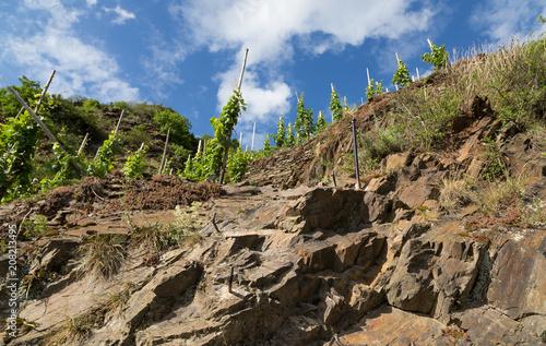 Klettersteig Cochem : Steilster weinberg mit toller aussicht calmont klettersteig