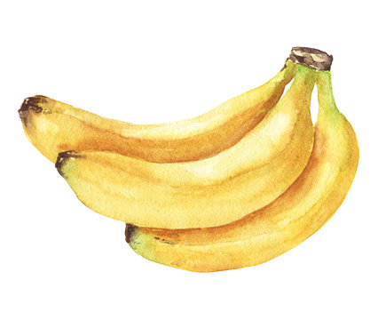 Hand drawn watercolor banana bunch, isolated fruits on white background. Tropical food delicious illustration.