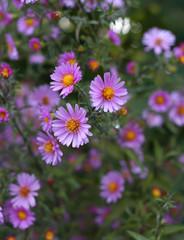 summer nature flowers in soft focused bokeh