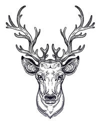 Deer head with beautiful antlers, hand drawn vintage illustration.