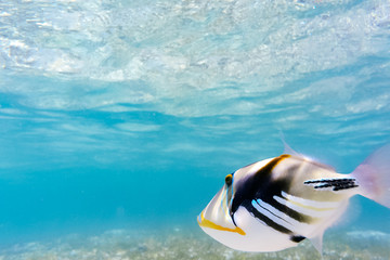 石垣島の海