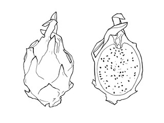 vector line illustration of pitaya. Isolated dragon fruit for label, menu, icon. Black line sketched hand painted fruits on white background. Whole and half of pitahaya