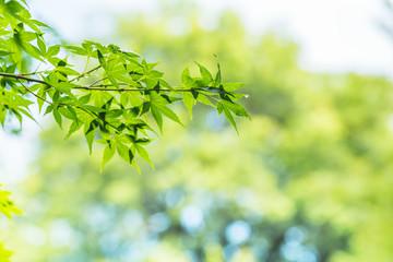 水滴のついた新緑の葉