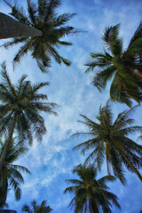 Coconut Palm Trees on clear summer skies
