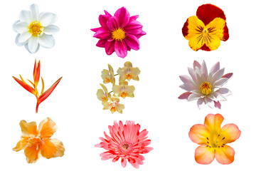 Colorful of spring flowers