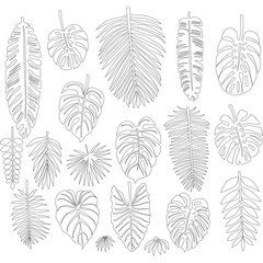 Set of leaves in the contour style of tropical palms