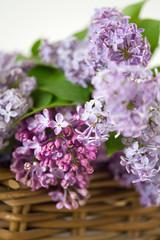 Lilac spring flowers in wooden vintage basket