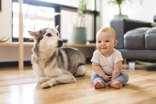 Baby girl sitting with husky on the floor