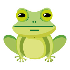 cute exotic frog wild animal
