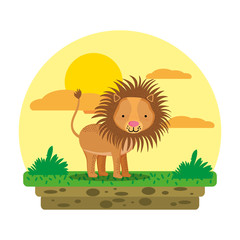 cute male lion wild animal in the landscape