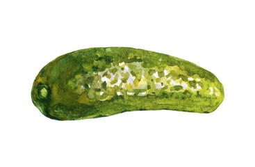 Watercolor painting pickle cucumber on white background. Hand drawn vegetable illustration