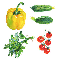 Watercolor set of fresh vegetables and greenery on white background. Hand drawn yellow paprika pepper, parsley, cucumbers, cherry tomatoes