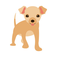 dog puppy vector illustration   flat style  front