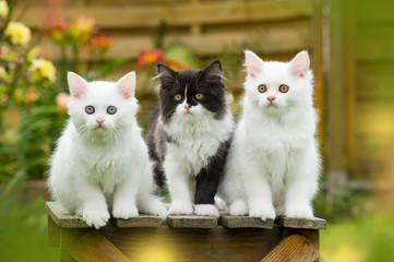 Kätzchen auf einem Hocker im Garten