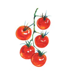 Watercolor tomato on white background. Hand drawn vegetable illustration. Painting branch of cherry tomatoes