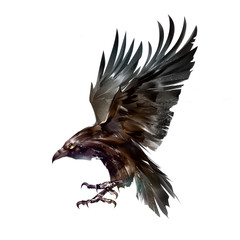 Wall Mural - color isolated sketch bird crow in flight