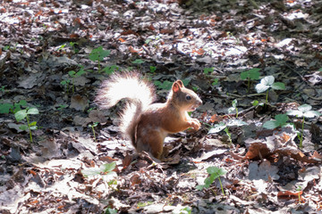 the squirrel sits on the ground