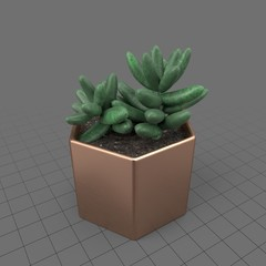Cactus in a geometric planter