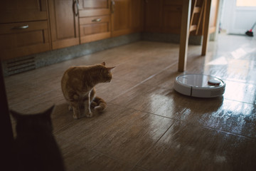 Cat looking at vacuum cleaner on the kitchen floor