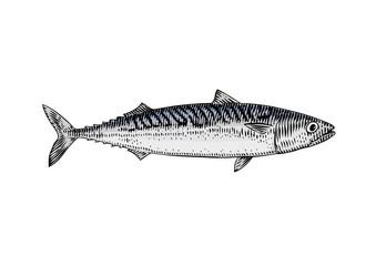 Live mackerel
