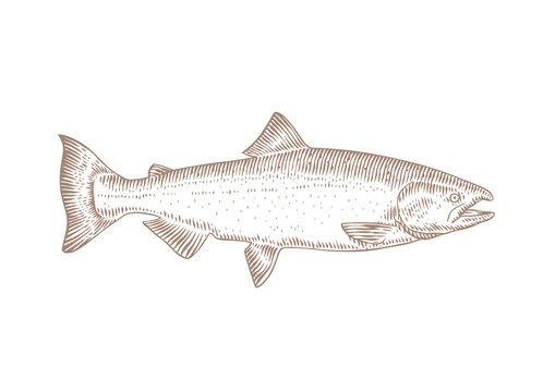 Live fish