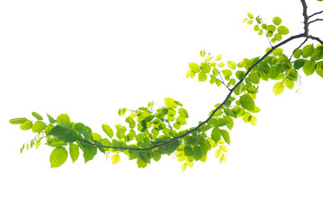 beautiful green leave on white background