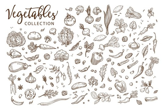 Healthy organic vegetables collection of monochrome sepia sketches