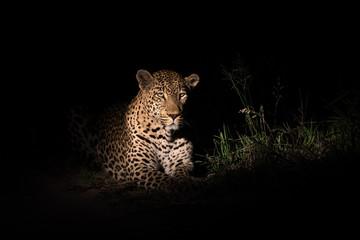 Male leopard in the spotlight Wall mural