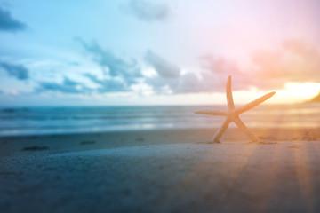Starfish on  Beach. at Sunset