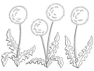 Dandelion taraxacum flower graphic black white isolated sketch set illustration vector