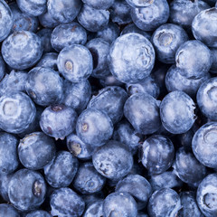 Freshly picked blueberries background