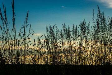 Grass against the background of the evening sky