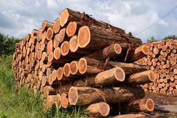 切り出された杉の丸太