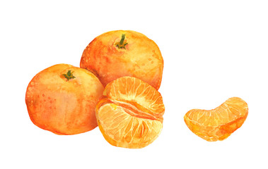 Mandarin orange fruit. Watercolor