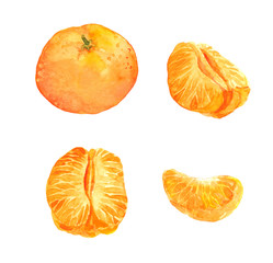 Set of tangerine orange fruit - watercolor