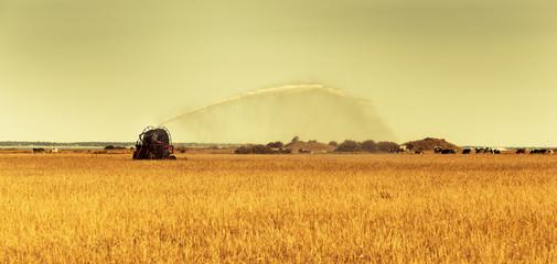Bewässerung eines Getreidefeldes